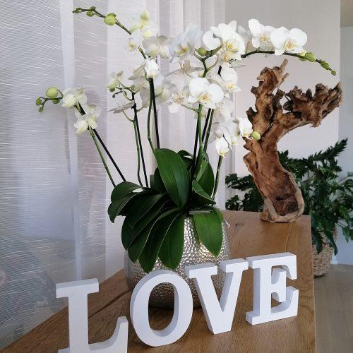 Floristik-Orchidee-weiss_03