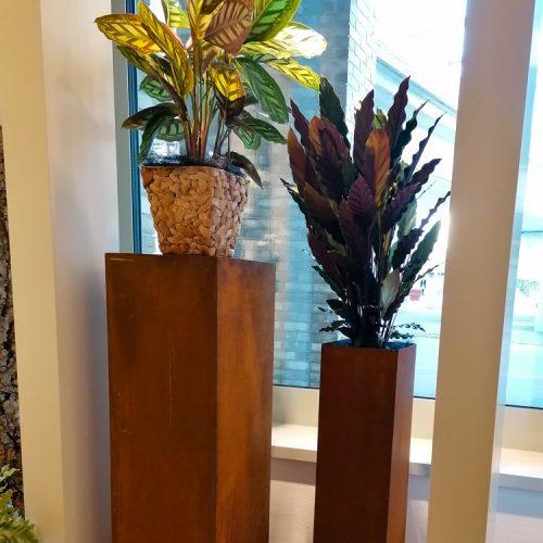 Calathea makoyna und Calathea rufibarba (Korbmarante) auf Rostsäulen